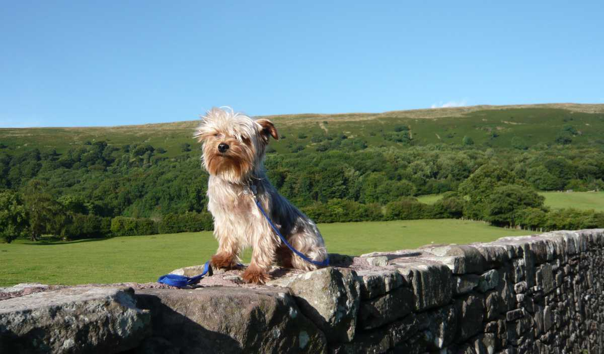 Treacle Valley campsite is a dog friendly campsite near Torquay